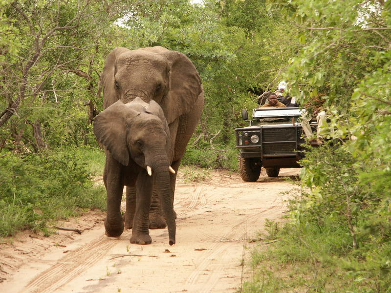 Game Drive 1
