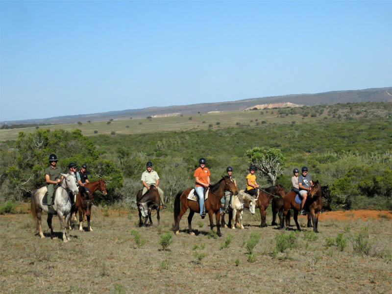Amakhala Game Reserve Horse Trailson trail