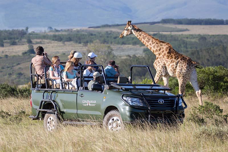 Game Drive Giraffe (1)