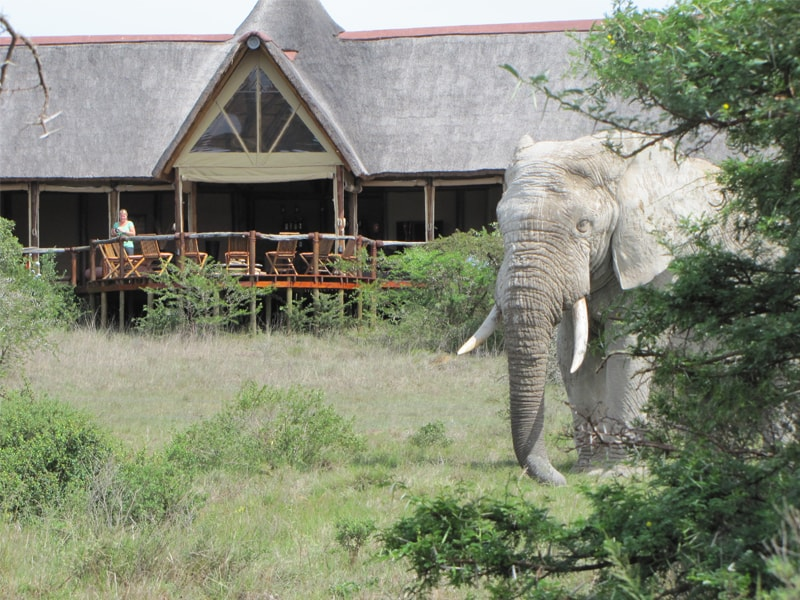 South_African_Game_Reserve_Bush_Lodge-min