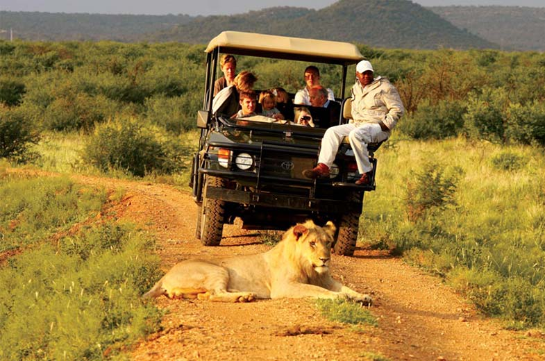 game-drive-lions-madikwe