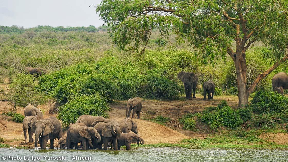 שמורת המלכה אליזבט, אוגנדה