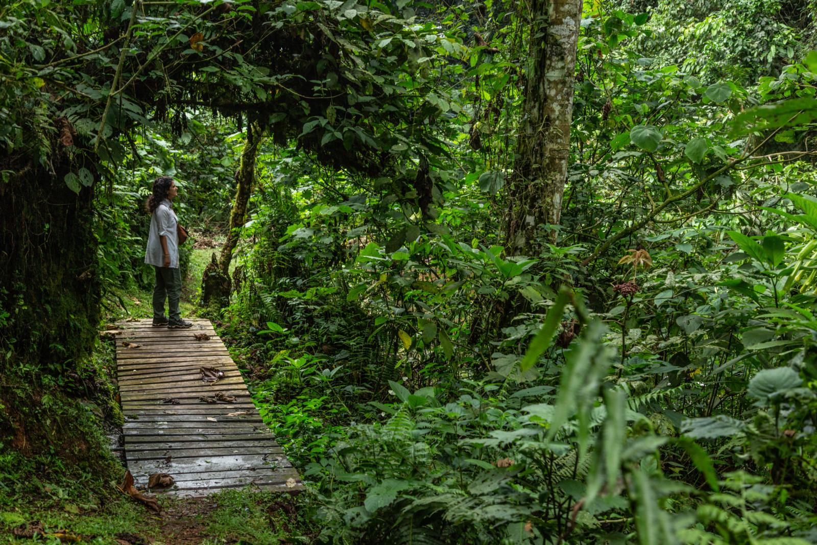 לודג'ים יוקרתיים באוגנדה - אריקני אפריקה למתפנקים.